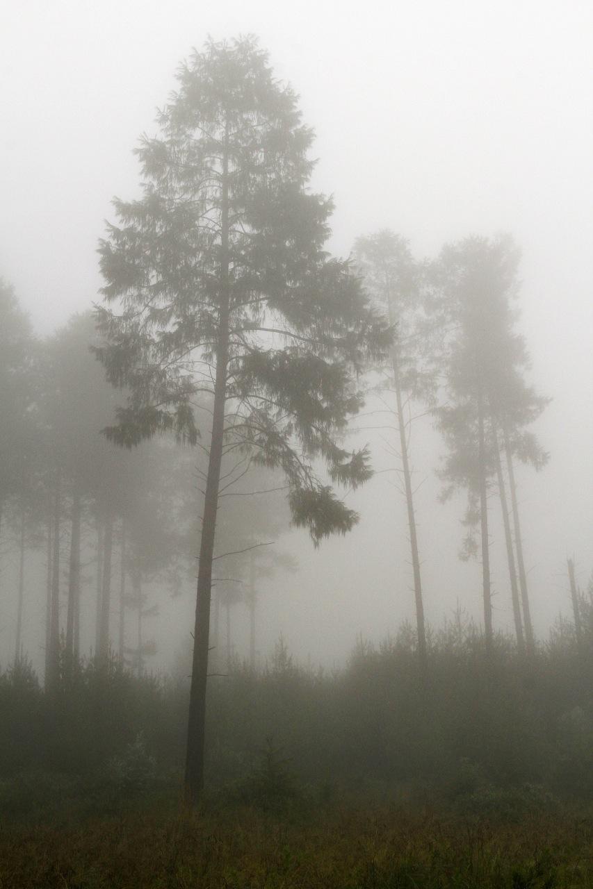 Misty Pines.