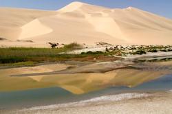 Dunescape Namibia.