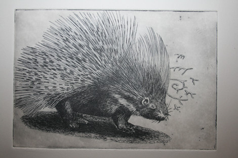 The Shy Five: Porcupine
