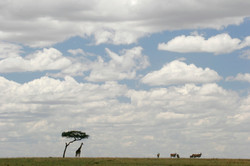 Giraffe and Eland Skyscape.