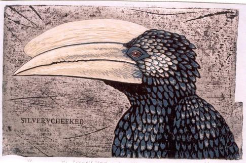 The Hornbill Series:Silverycheeked Hornbill