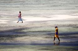 Zanzibar Beach strollers.