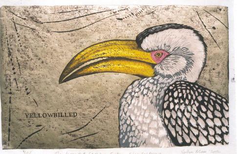 The Hornbill Series:Yellowbilled Hornbill