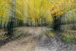 Autumn Forest Dream.