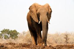 Elephant encounter.