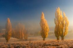 Autumn Mist, Fouriesburg.