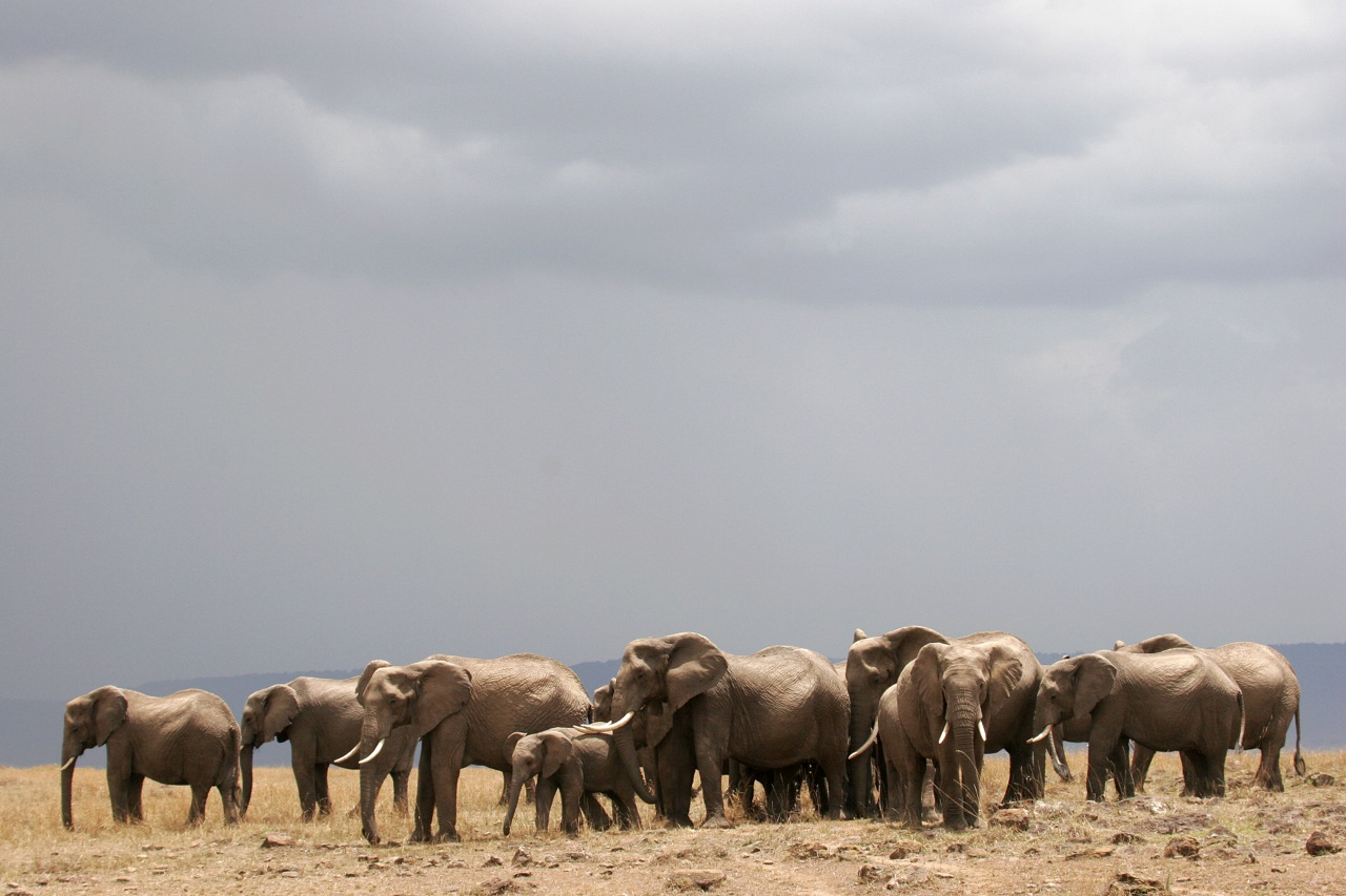 Elephant herd Skyscape.