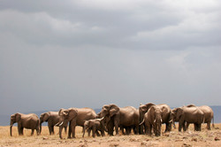 Elephant herd Skyscape.