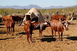 Himba Village scene, Namibia.