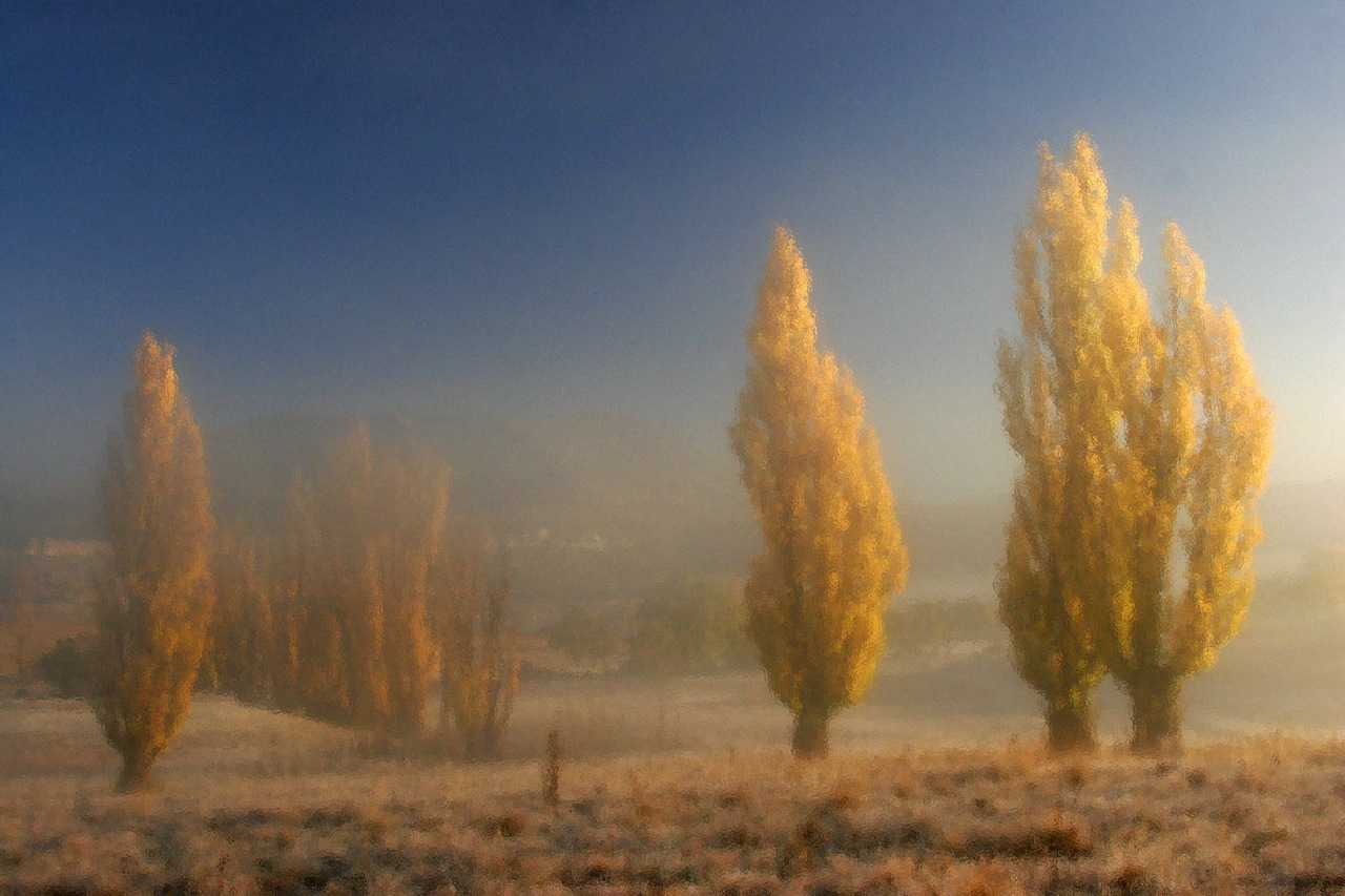 Misty Poplar Impression.