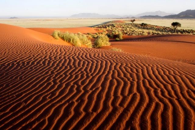 Dune Landscape.