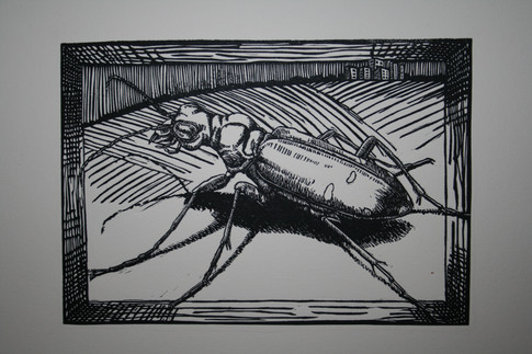 Its all abour Perspective:Tiger Beetle