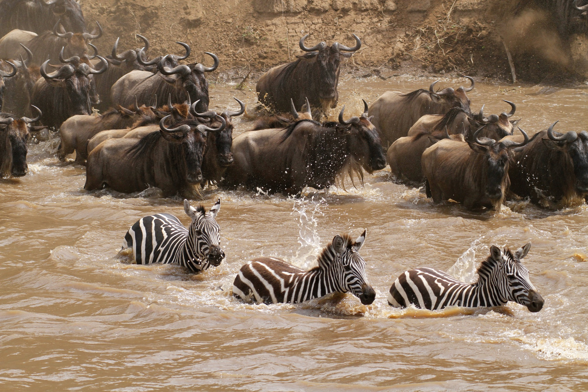 Mara River Crossing.