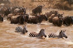 Mara River Crossing.