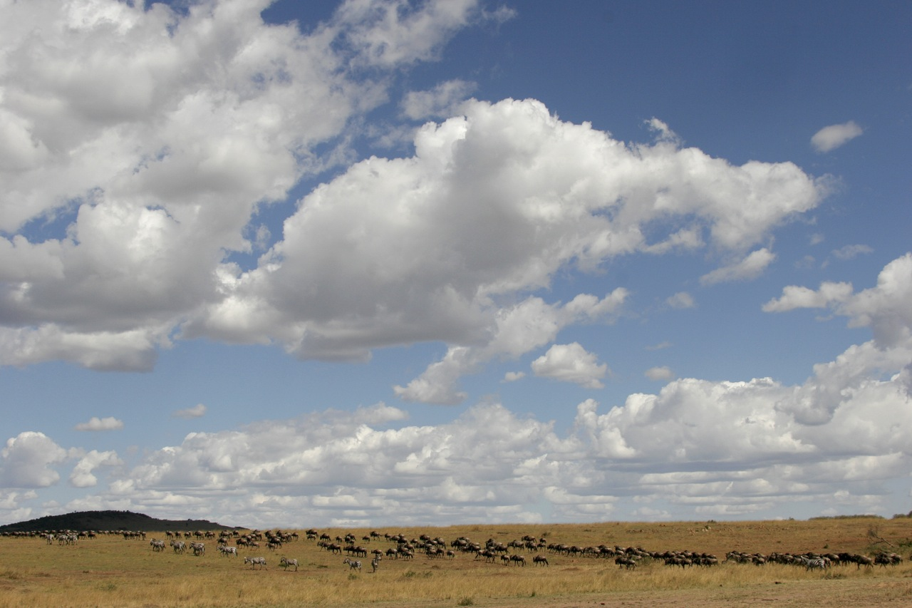 Mara Migration Skyscape.