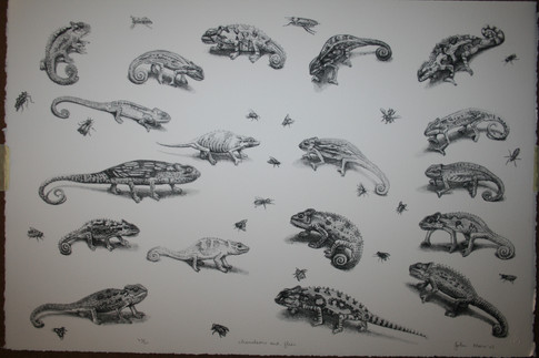 Chameleons and Flies