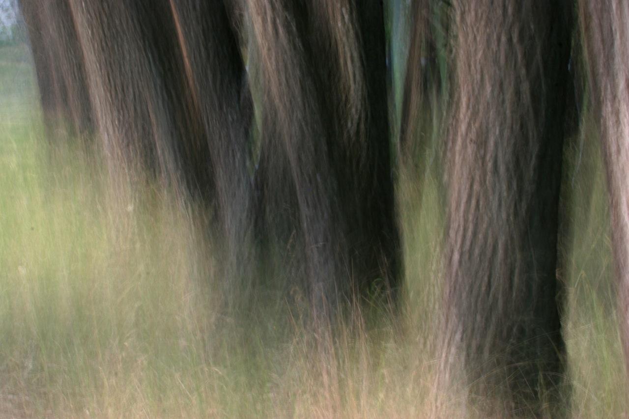 Mystical Trees.