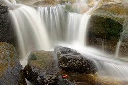 Rose hips and flowing water.