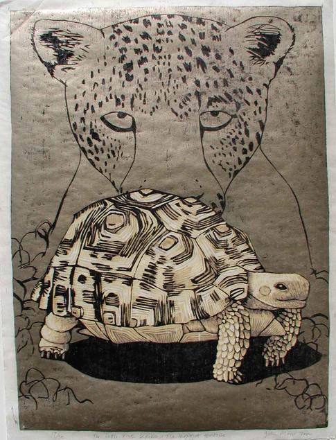 The Little Five Series:Leopard Tortoise