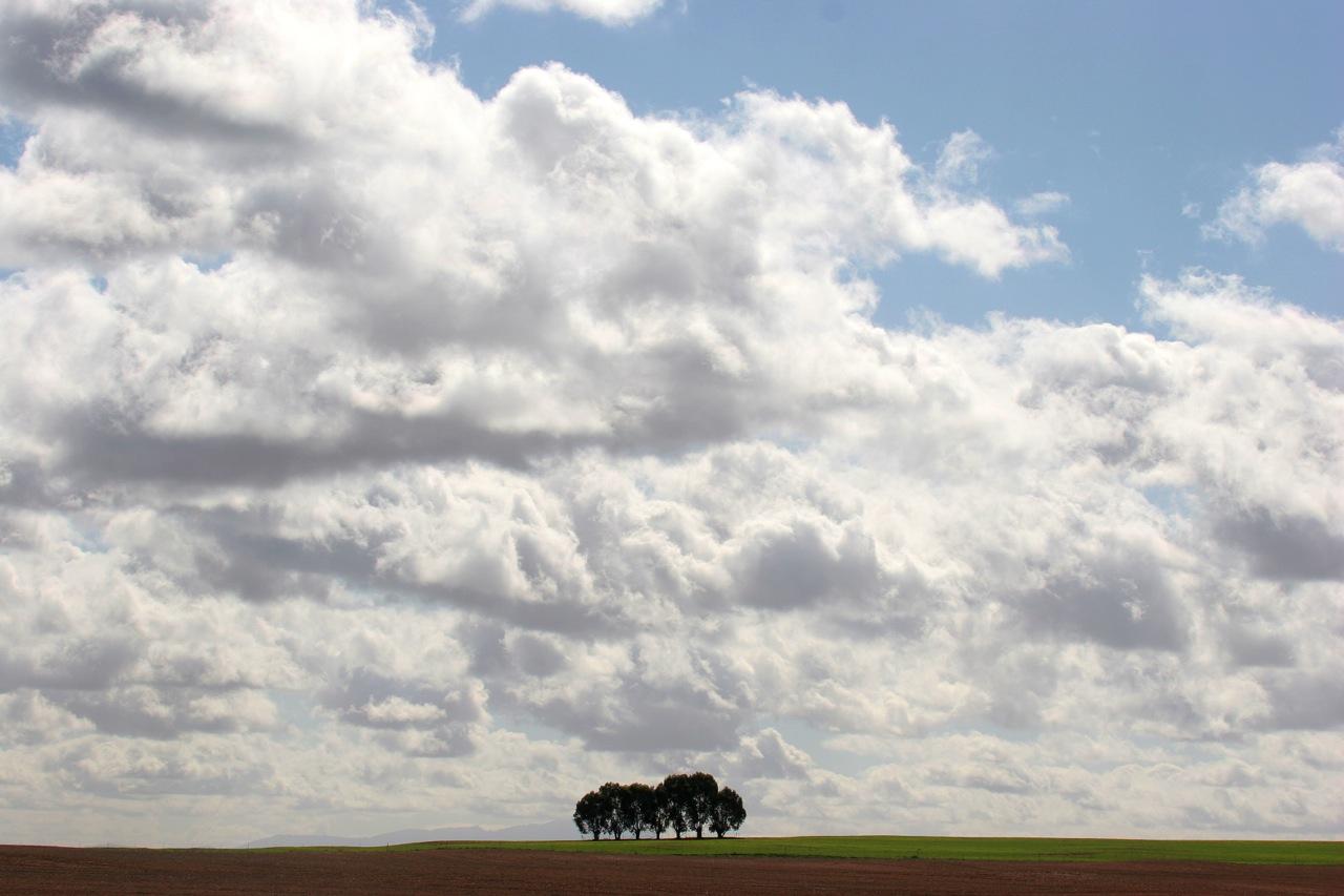 Seven Trees.