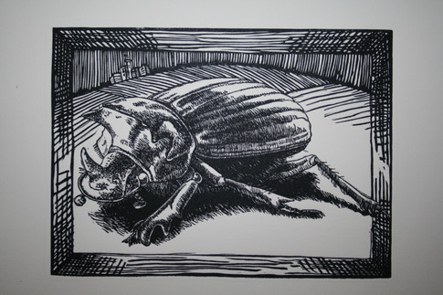 Its all abour Perspective:Emerald Dung Beetle