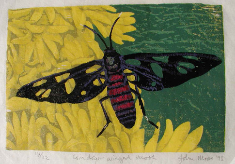 Window-winged Moth