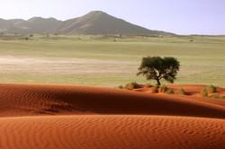Namib contrasts.