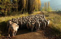 Autumn Flock..jpg