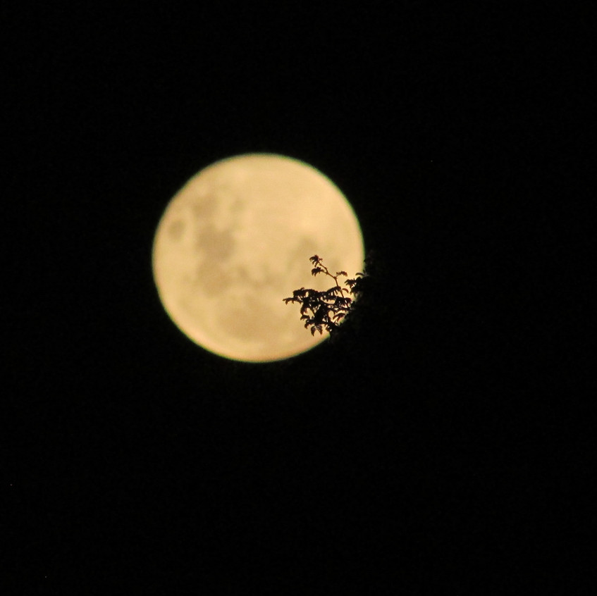 And we had a full moon