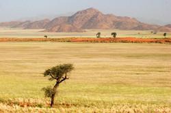 Namib Desert Grassland.