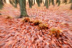 Forest Floor Impression.