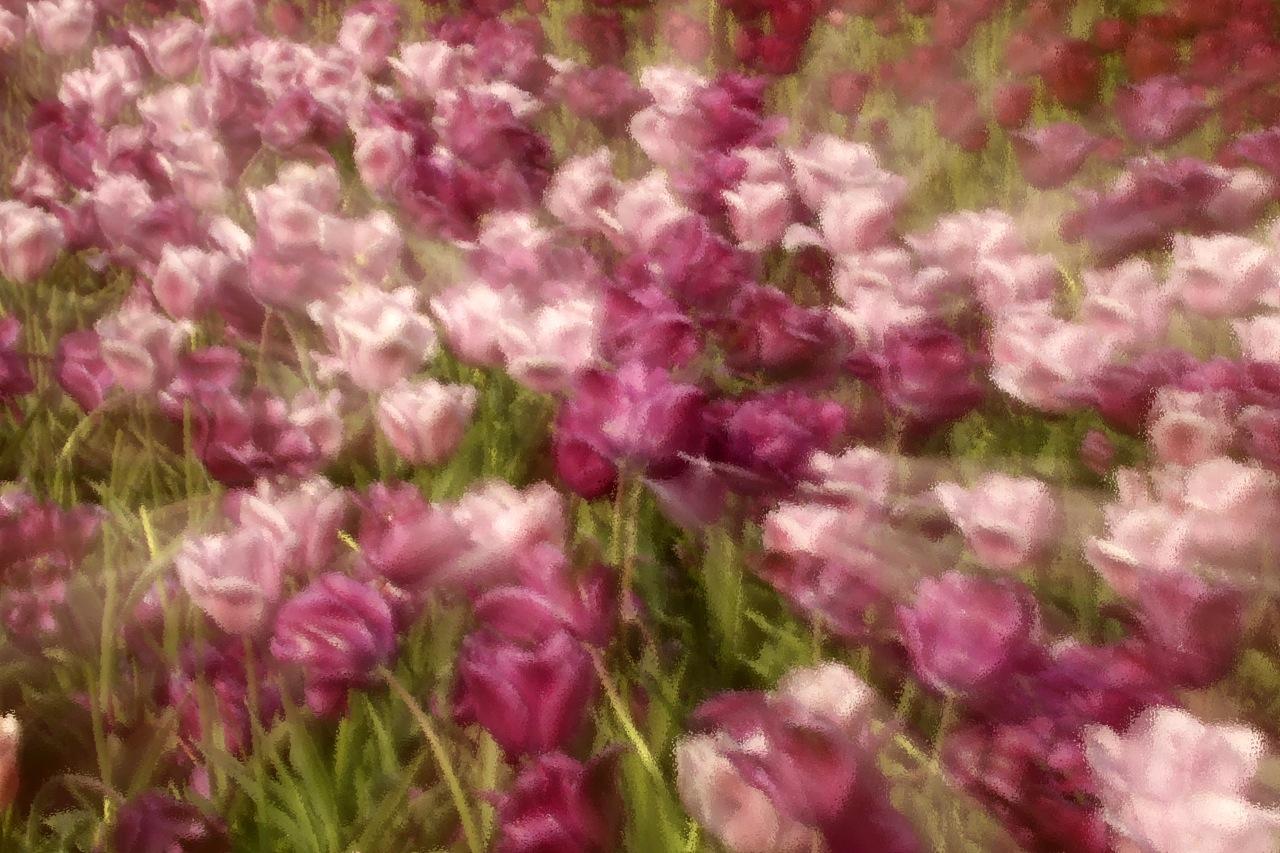 Tulip impressions.