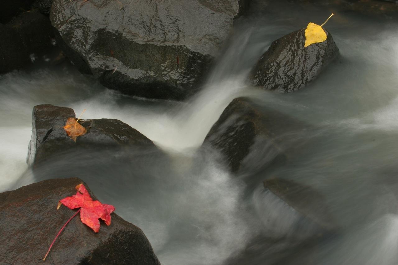 Boulder Leaves.