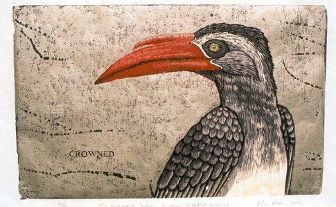 The Hornbill Series:Crowned Hornbill