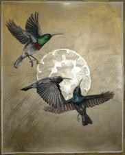 Flight os the Sun, and Birds