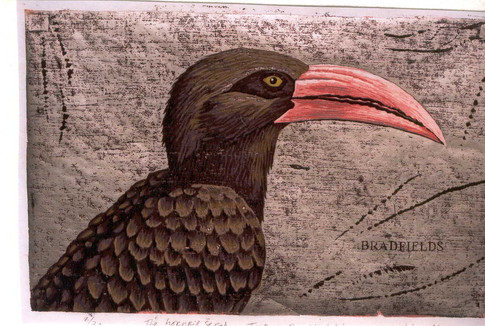 The Hornbill Series:Bradfields Hornbill