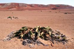 Stark desert