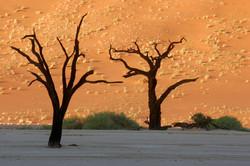 Acacia Silhouettes, Dead Vlei Trees.