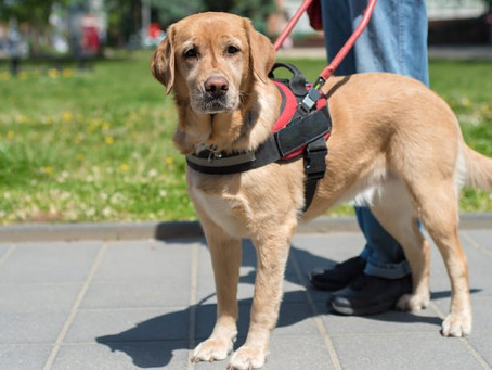 Your Rights with an Assistance or Service Animal