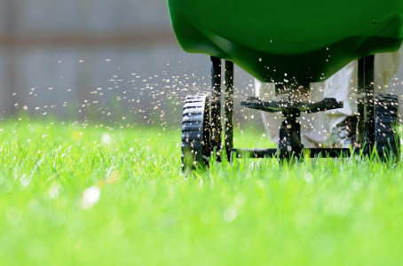 A Guide to Fertilizing Your Lawn