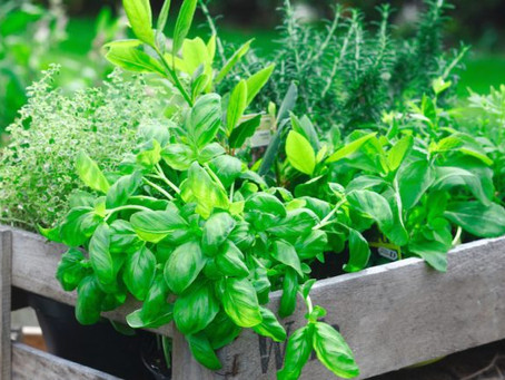 Homegrown Flavor: Growing Your Own Herb Garden