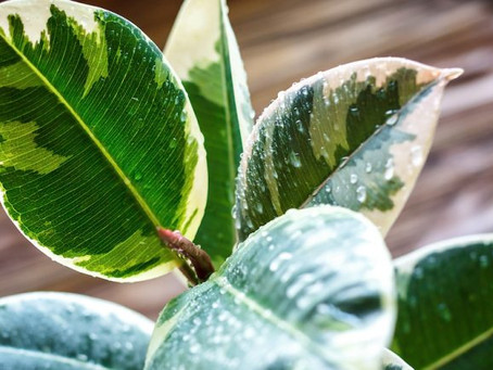 How to Choose the Perfect Houseplants
