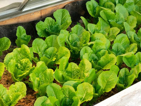 Protect Your Plants With a Cold Frame