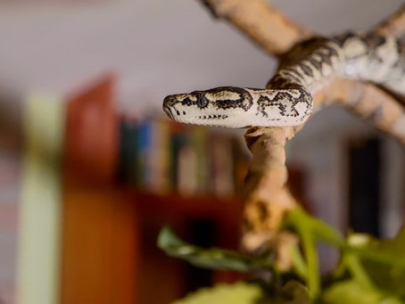 Slithers and Shivers! Removing a Snake From Your House