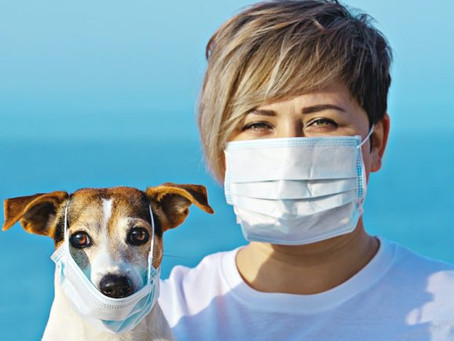 Coronavirus and Pet Care: Safe Practices During the COVID-19 Pandemic