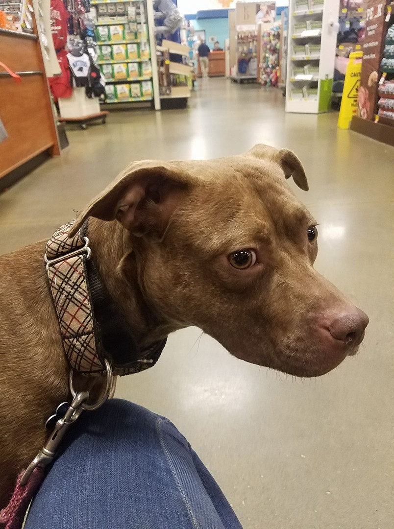 First time at petsmart