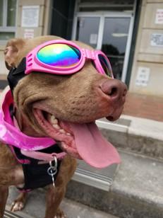 Coolest pup around