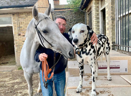 Dotty about Roy Rocket? You could be his owner for a day...