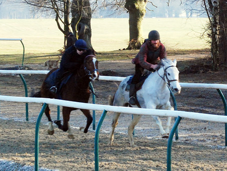 A spin on the Newbury turf for Roy Rocket