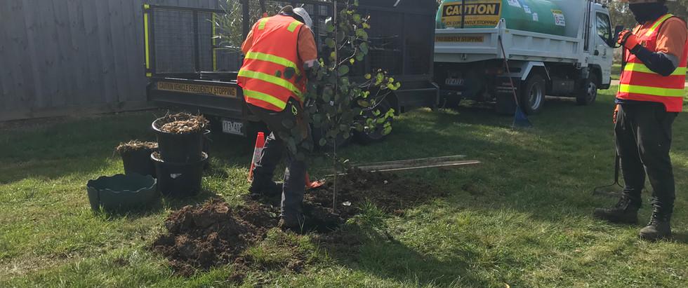 Wyndnam Planting 2020